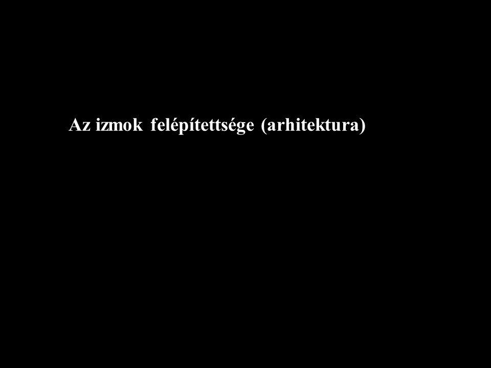 Az izmok felépítettsége (arhitektura)
