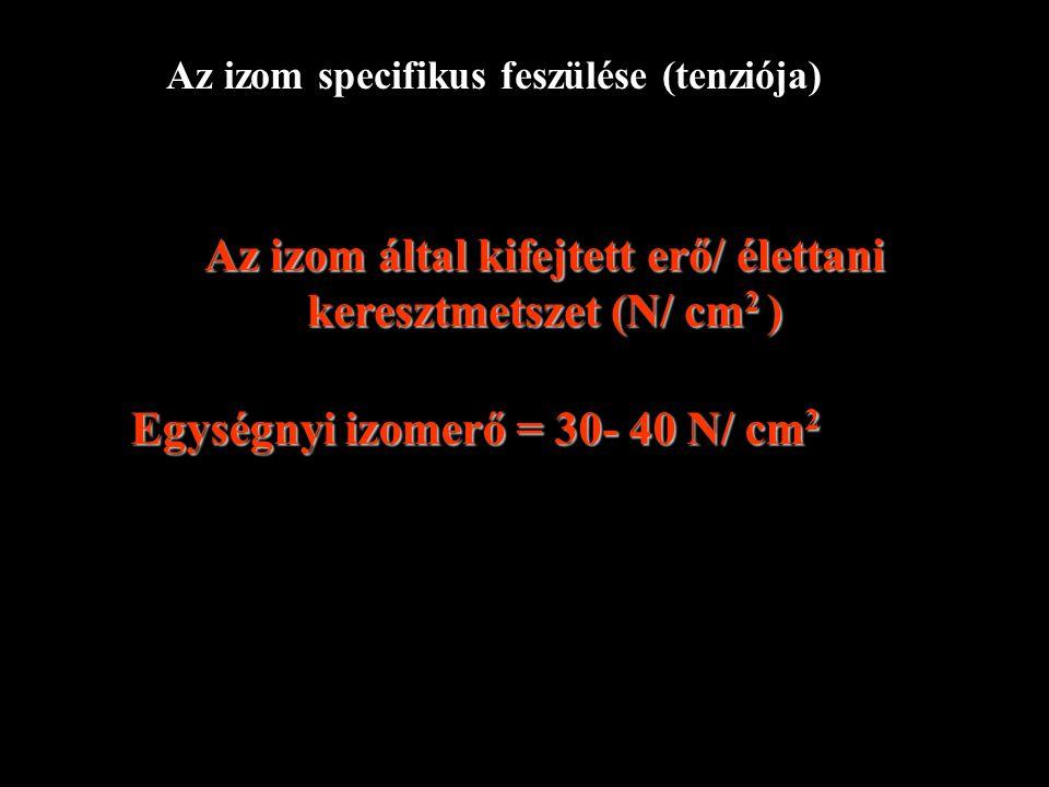 Az izom által kifejtett erő/ élettani keresztmetszet (N/ cm2 )