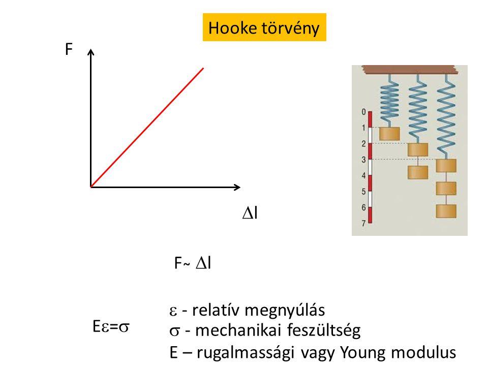 Hooke törvény F. l. F ̴ l.  - relatív megnyúlás.