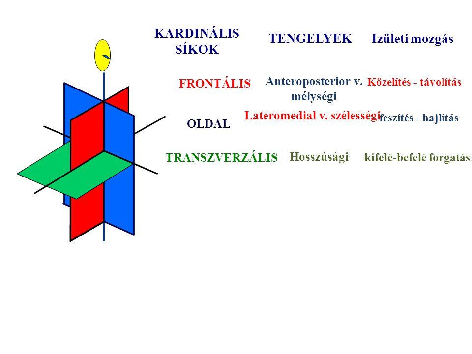 Lateromedial v. szélességi