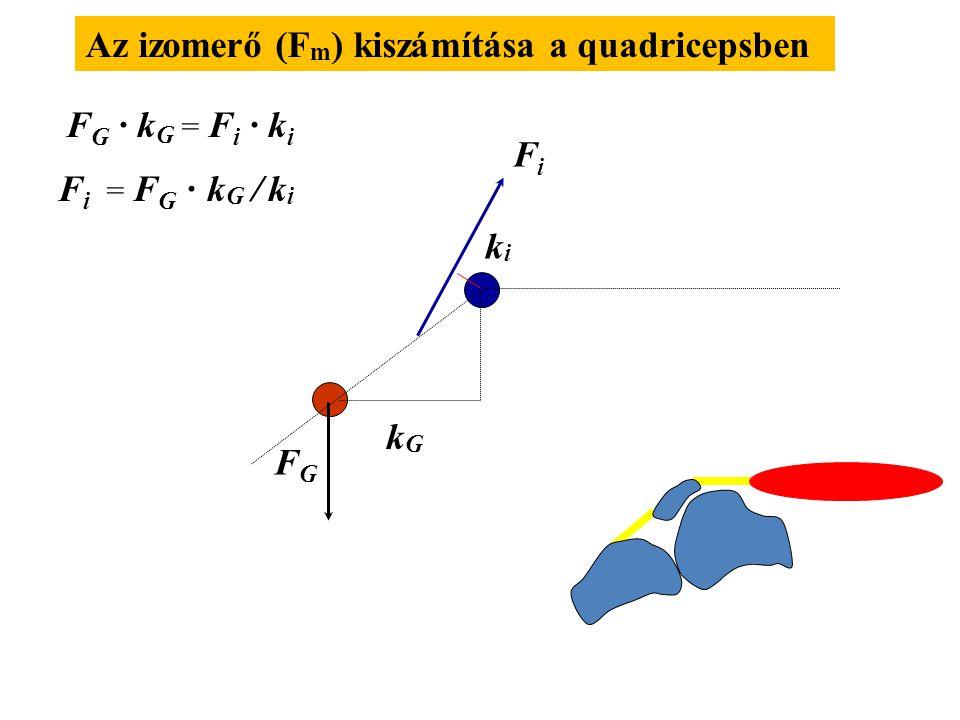 Az izomerő (Fm) kiszámítása a quadricepsben