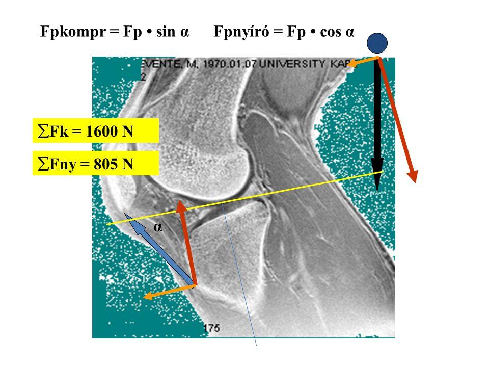 Fpkompr = Fp • sin α Fpnyíró = Fp • cos α Fk = 1600 N Fny = 805 N α
