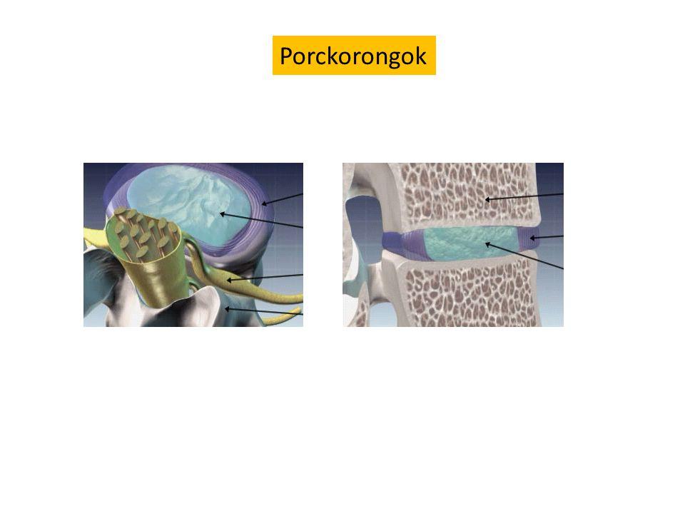 Porckorongok