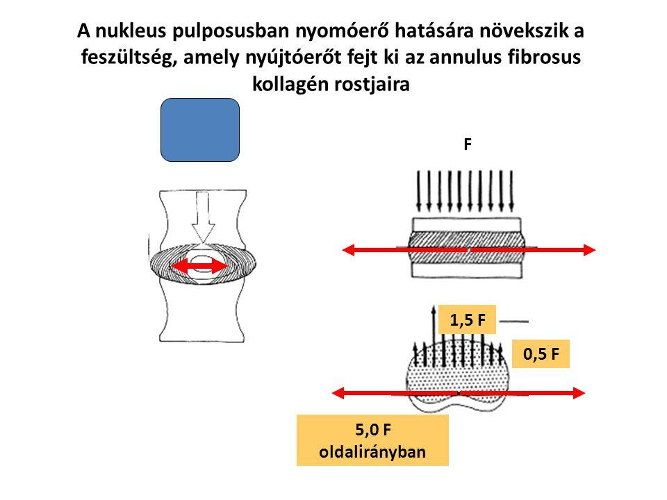 A nukleus pulposusban nyomóerő hatására növekszik a feszültség, amely nyújtóerőt fejt ki az annulus fibrosus kollagén rostjaira