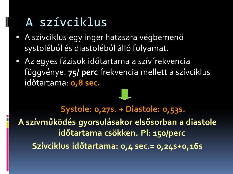 Szívciklus időtartama: 0,4 sec.= 0,24s+0,16s