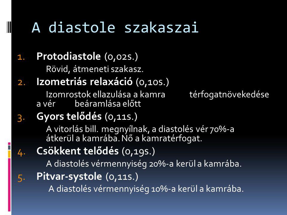 A diastole szakaszai 1. Protodiastole (0,02s.)