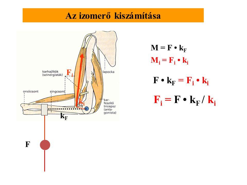 Az izomerő kiszámítása