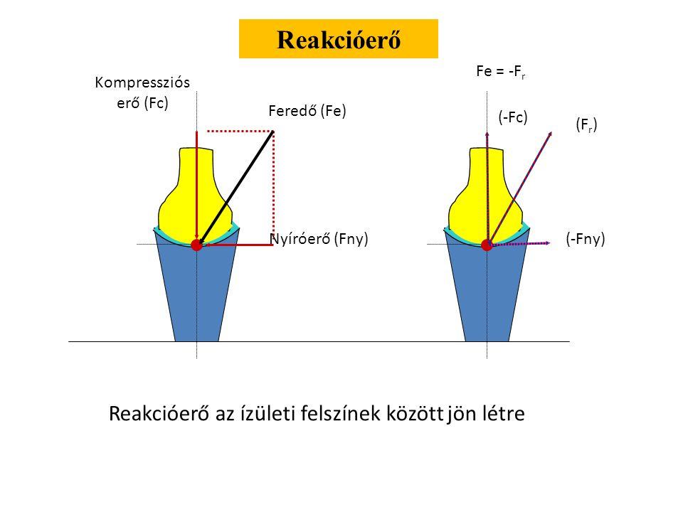 Reakcióerő Reakcióerő az ízületi felszínek között jön létre Fe = -Fr