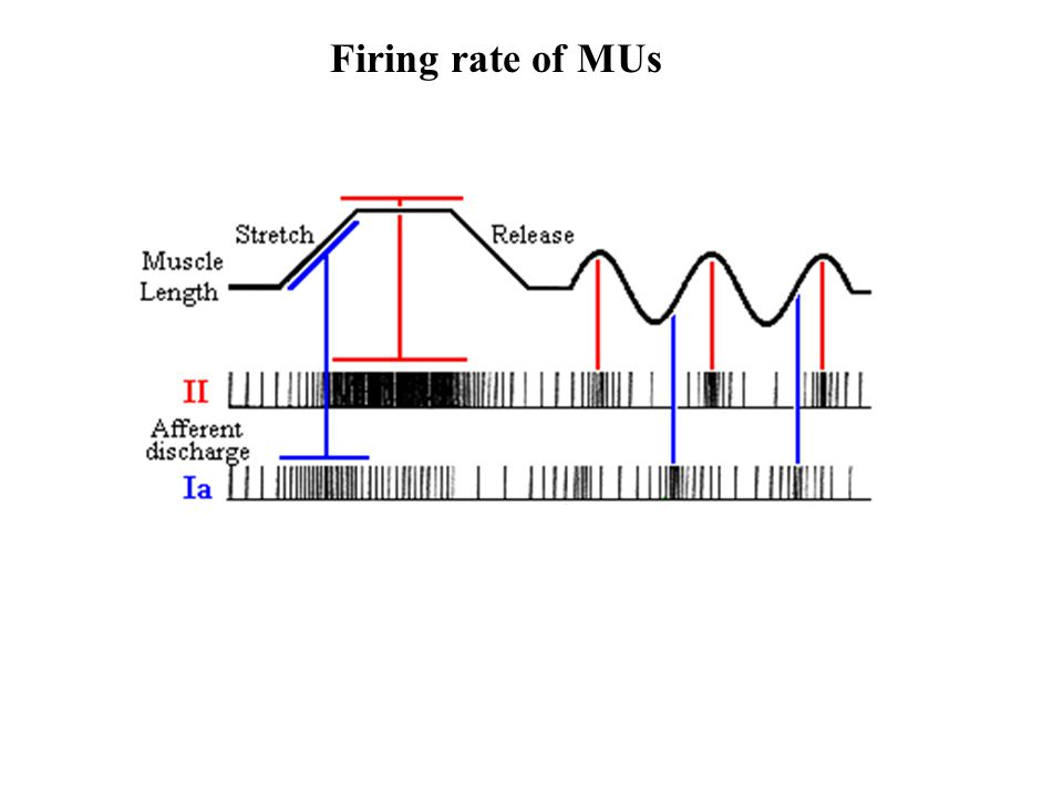 Firing rate of MUs