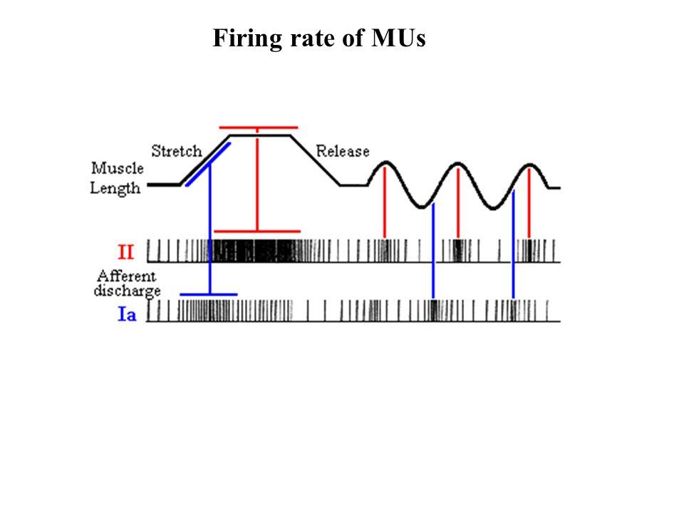 Firing rate of MUs