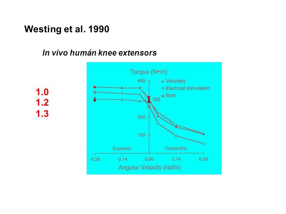 Westing et al. 1990 In vivo humán knee extensors 1.0 1.2 1.3