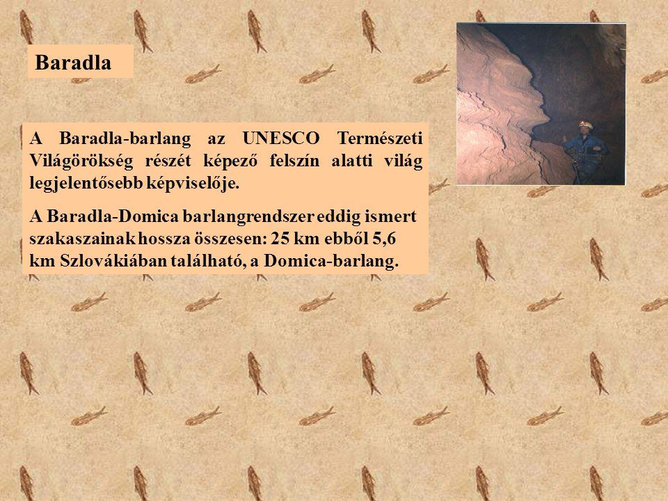 Baradla A Baradla-barlang az UNESCO Természeti Világörökség részét képező felszín alatti világ legjelentősebb képviselője.