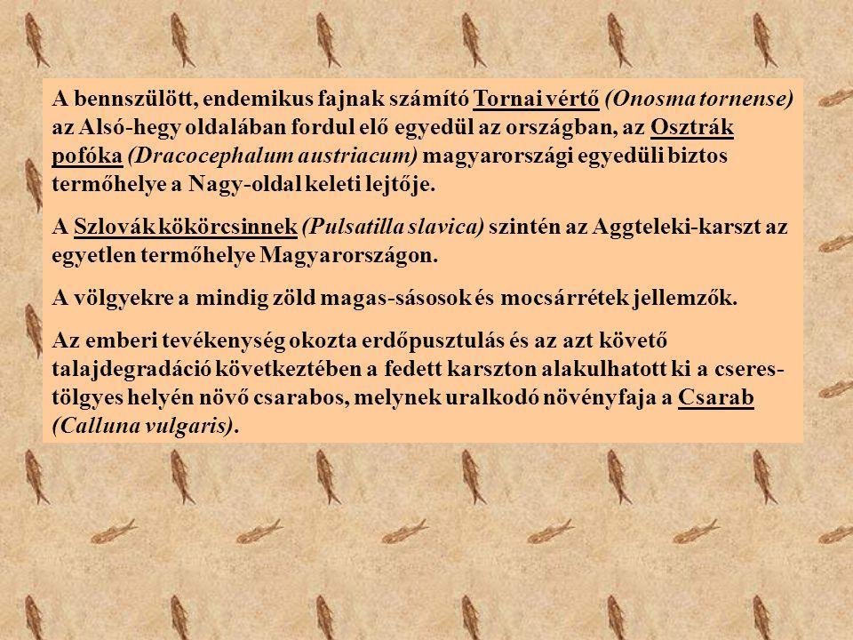 A bennszülött, endemikus fajnak számító Tornai vértő (Onosma tornense) az Alsó-hegy oldalában fordul elő egyedül az országban, az Osztrák pofóka (Dracocephalum austriacum) magyarországi egyedüli biztos termőhelye a Nagy-oldal keleti lejtője.