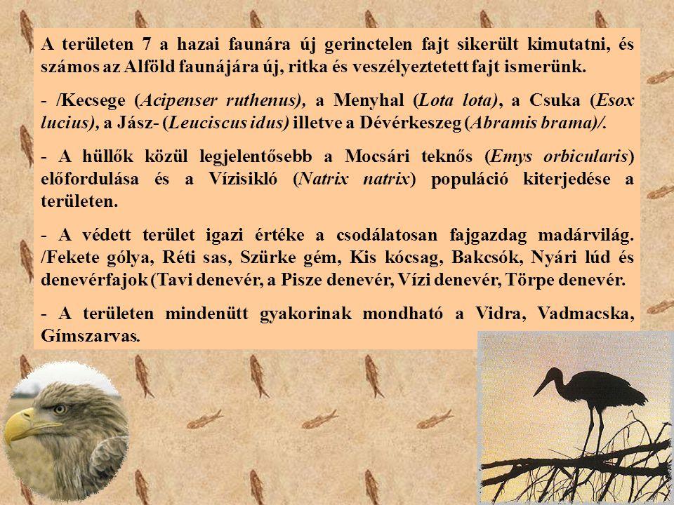 A területen 7 a hazai faunára új gerinctelen fajt sikerült kimutatni, és számos az Alföld faunájára új, ritka és veszélyeztetett fajt ismerünk.