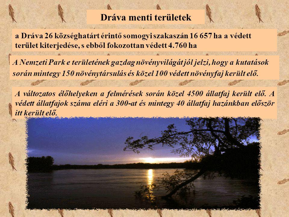 Dráva menti területek a Dráva 26 községhatárt érintő somogyi szakaszán 16 657 ha a védett terület kiterjedése, s ebből fokozottan védett 4.760 ha.