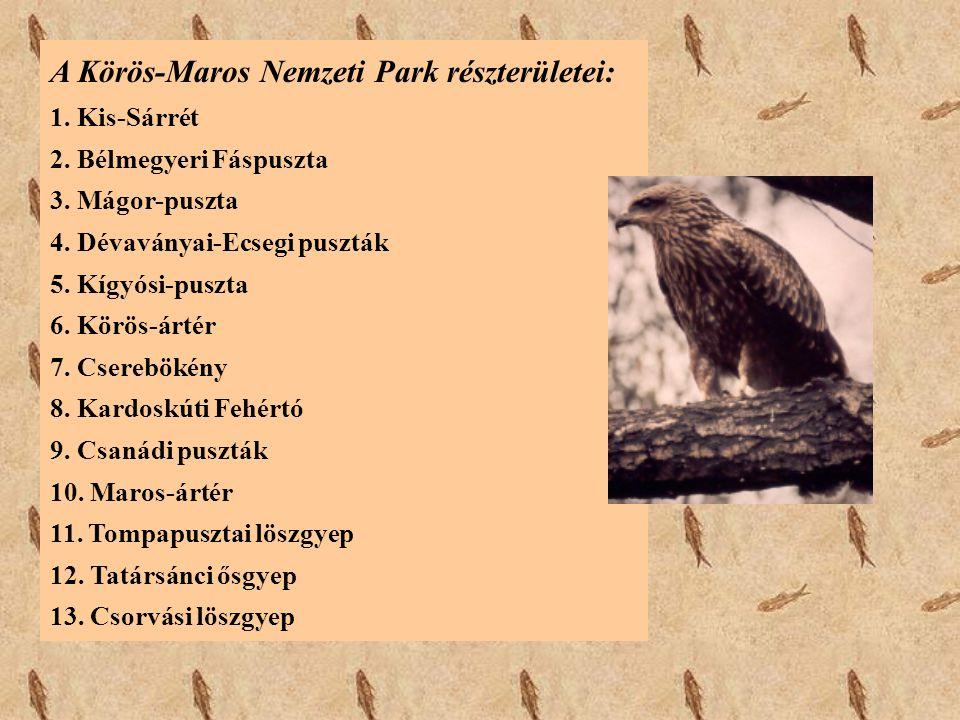A Körös-Maros Nemzeti Park részterületei: 1. Kis-Sárrét 2
