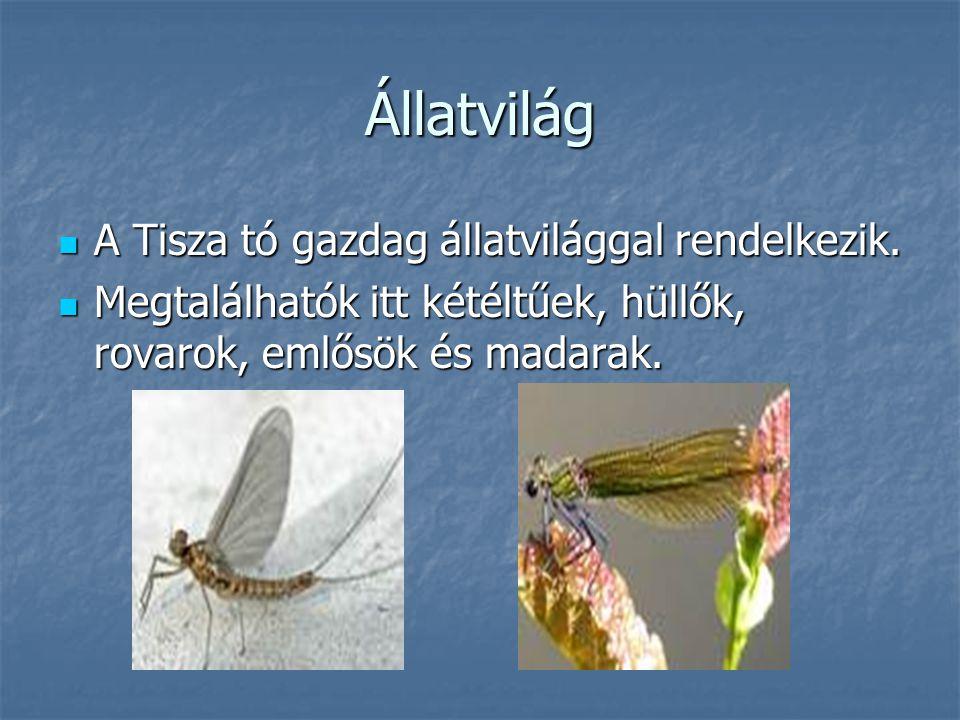 Állatvilág A Tisza tó gazdag állatvilággal rendelkezik.