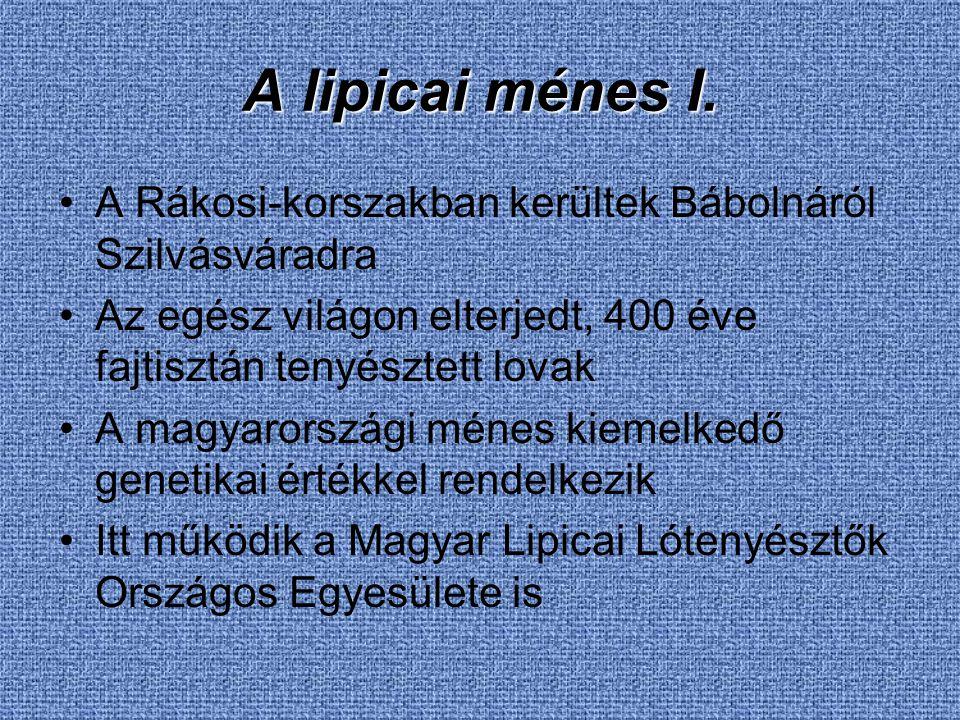 A lipicai ménes I. A Rákosi-korszakban kerültek Bábolnáról Szilvásváradra. Az egész világon elterjedt, 400 éve fajtisztán tenyésztett lovak.