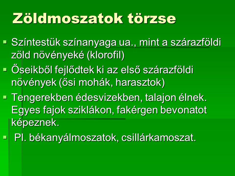 Zöldmoszatok törzse Színtestük színanyaga ua., mint a szárazföldi zöld növényeké (klorofil)
