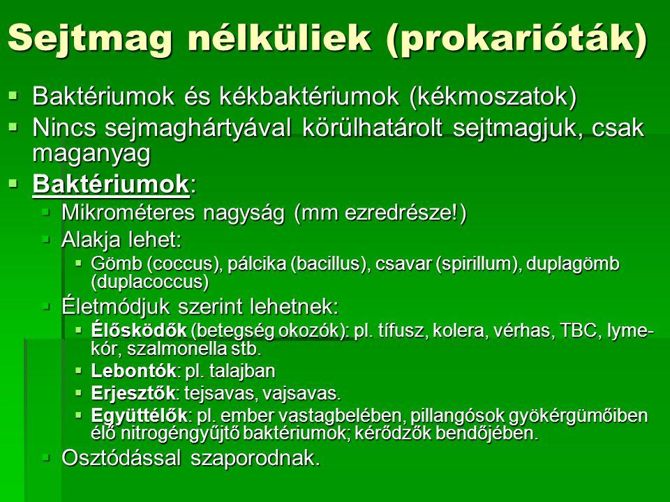 Sejtmag nélküliek (prokarióták)