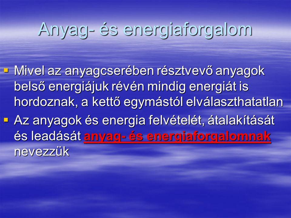 Anyag- és energiaforgalom