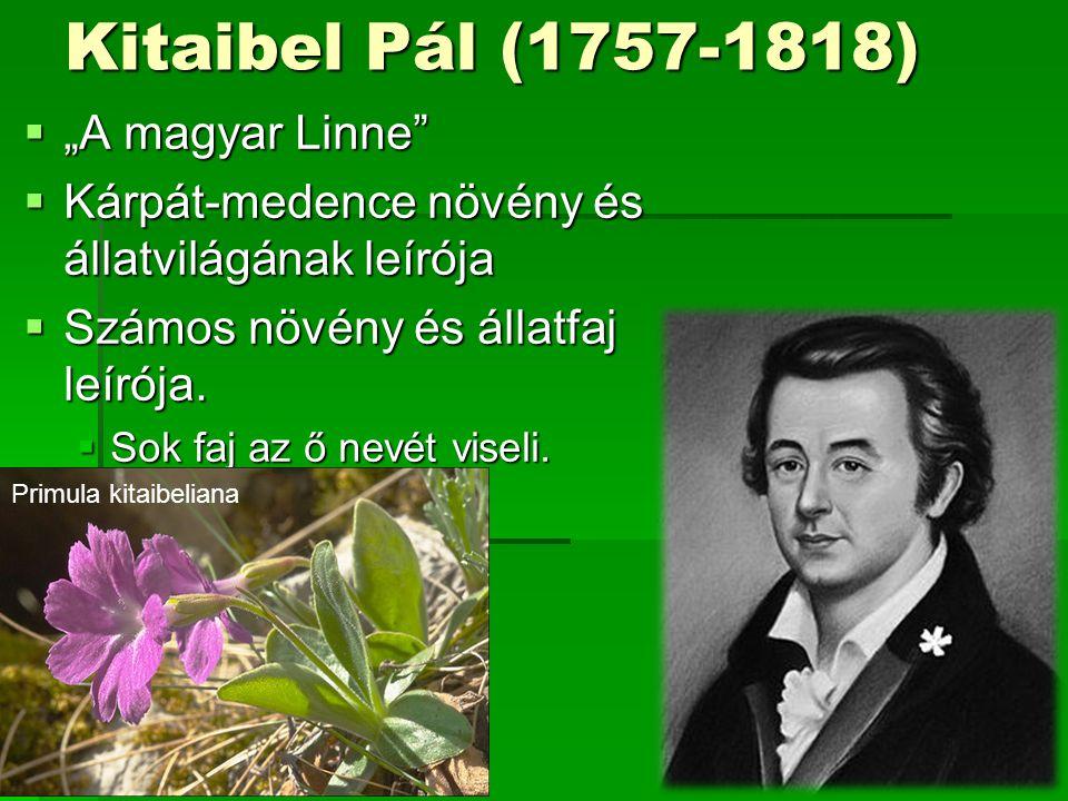 """Kitaibel Pál (1757-1818) """"A magyar Linne"""