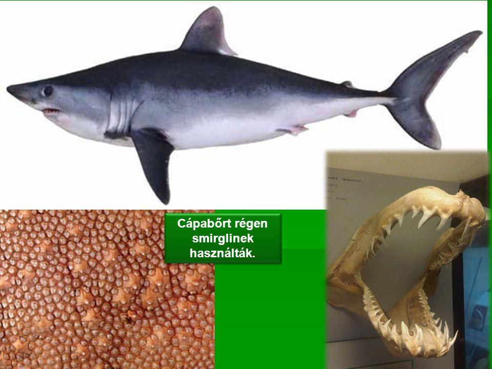 Cápabőrt régen smirglinek használták.