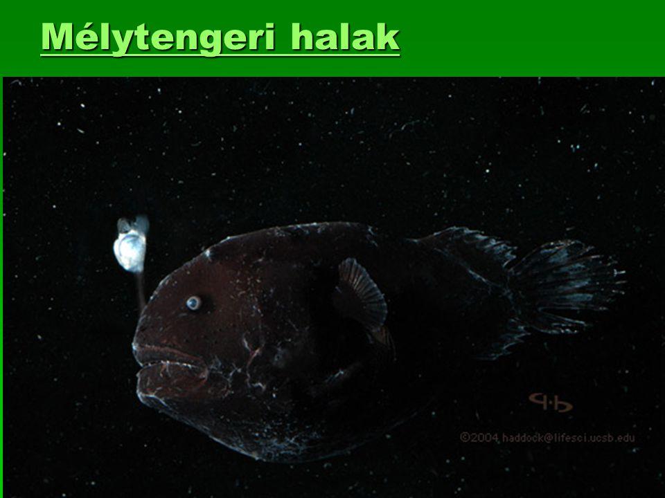 Mélytengeri halak