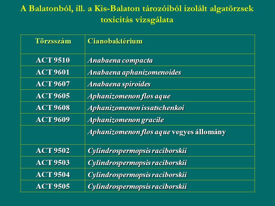 A Balatonból, ill. a Kis-Balaton tározóiból izolált algatörzsek