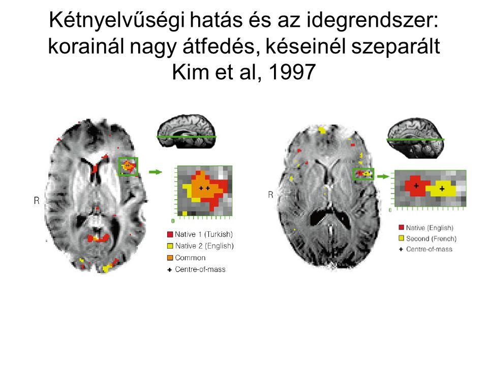 Kétnyelvűségi hatás és az idegrendszer: korainál nagy átfedés, késeinél szeparált Kim et al, 1997