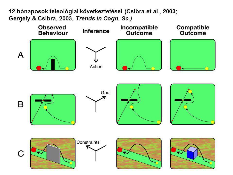 12 hónaposok teleológiai következtetései (Csibra et al., 2003;