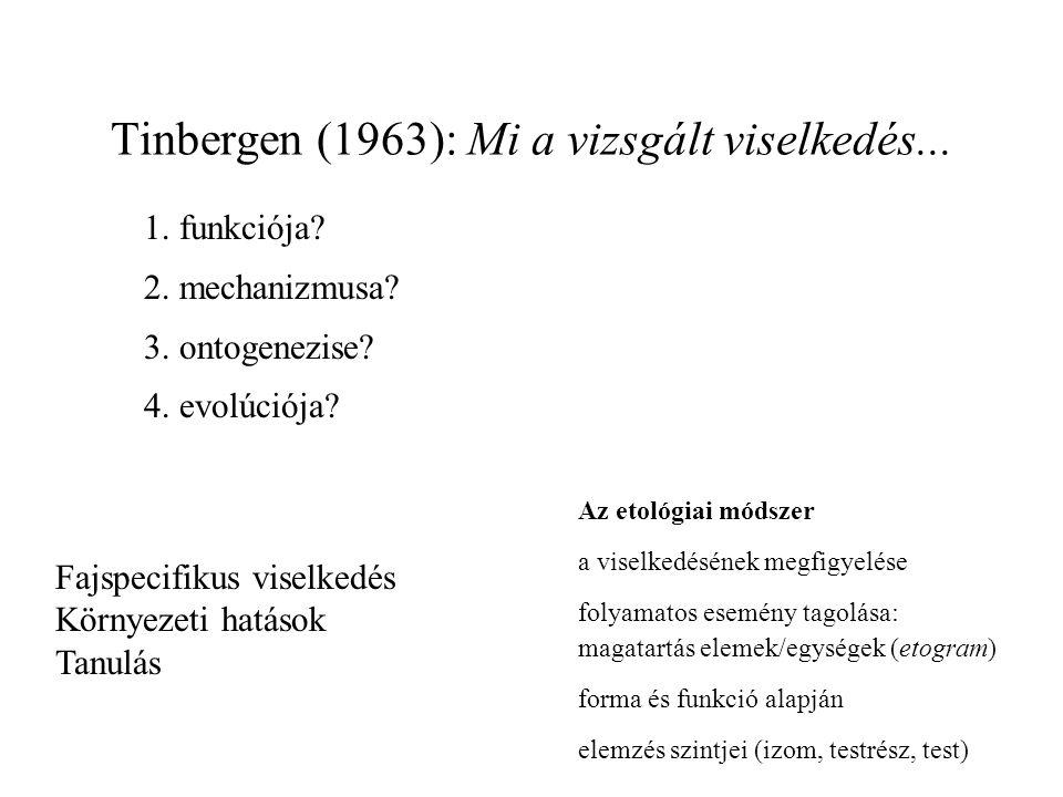 Tinbergen (1963): Mi a vizsgált viselkedés...