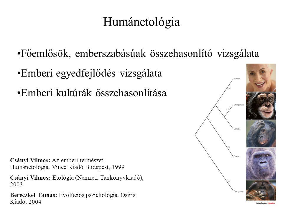 Humánetológia Főemlősök, emberszabásúak összehasonlító vizsgálata