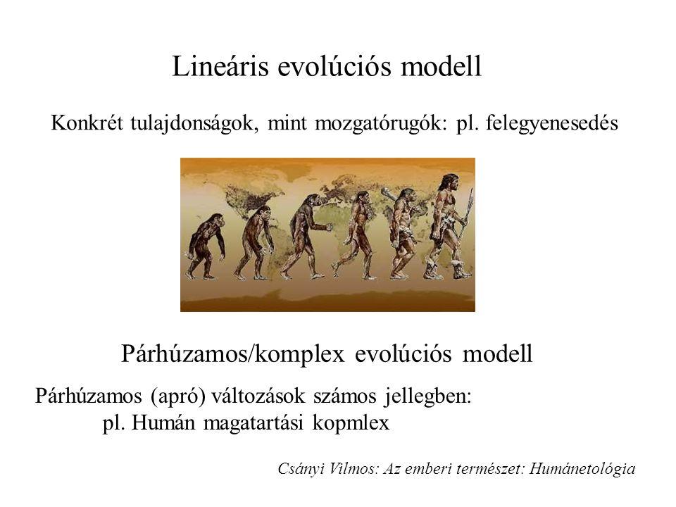 Lineáris evolúciós modell