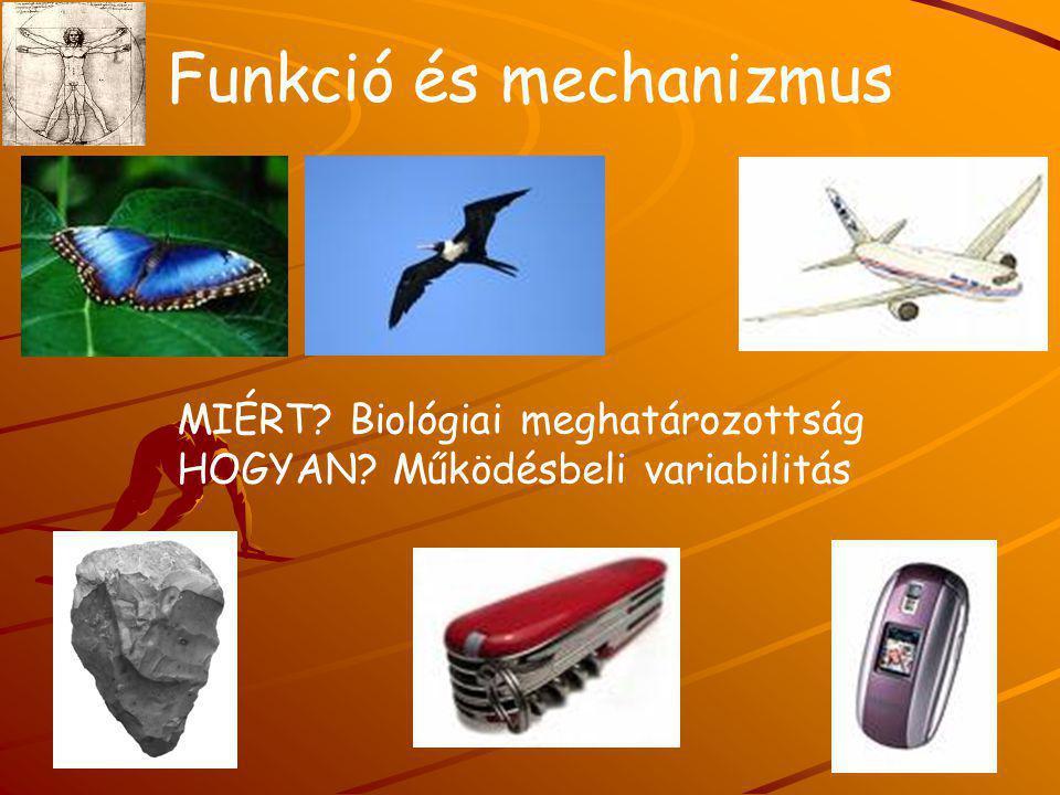 Funkció és mechanizmus