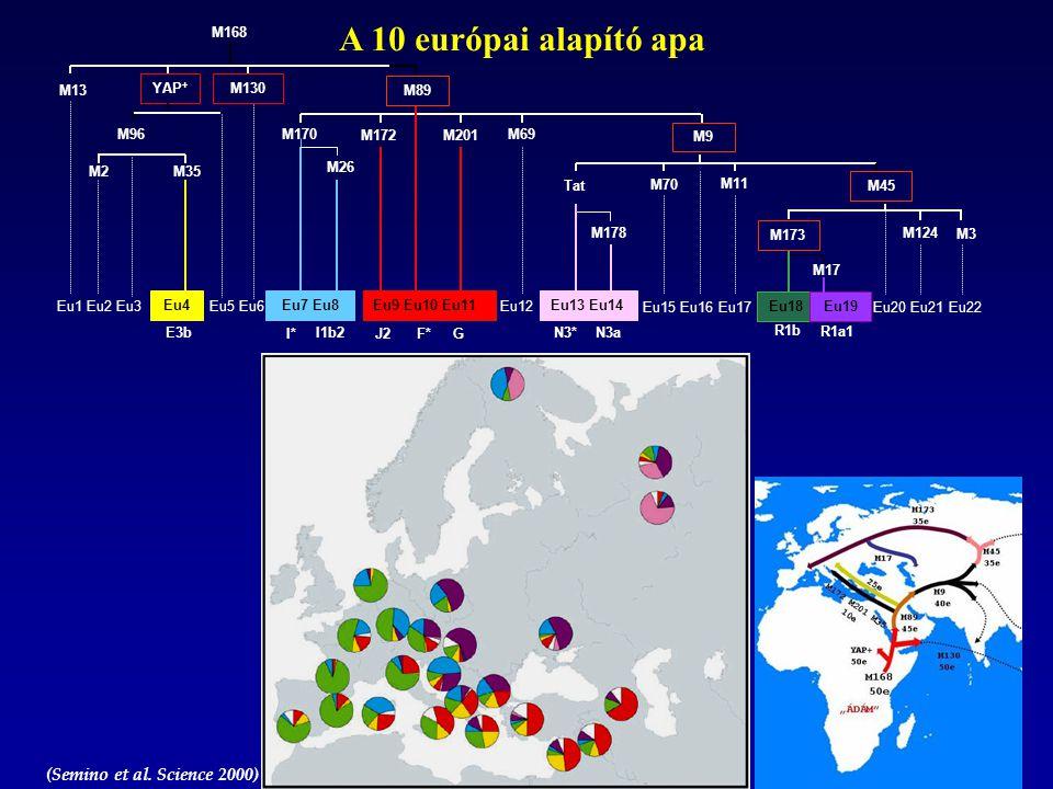 A 10 európai alapító apa M168 M13 YAP+ M130 M89 M96 M170 M172 M201 M69
