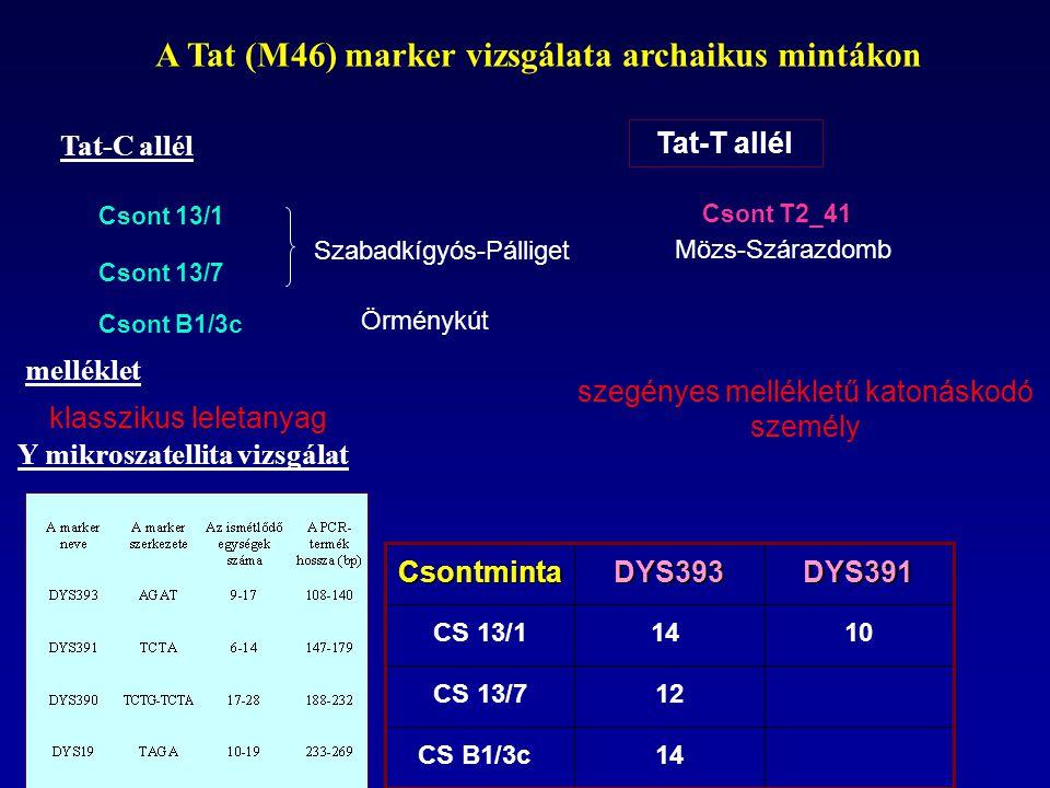 A Tat (M46) marker vizsgálata archaikus mintákon