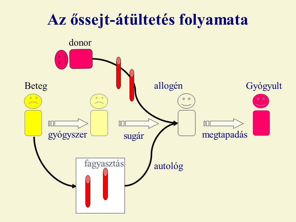 Az őssejt-átültetés folyamata