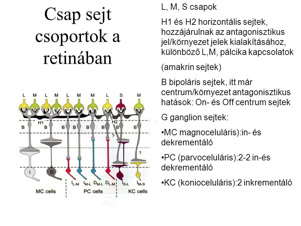 Csap sejt csoportok a retinában