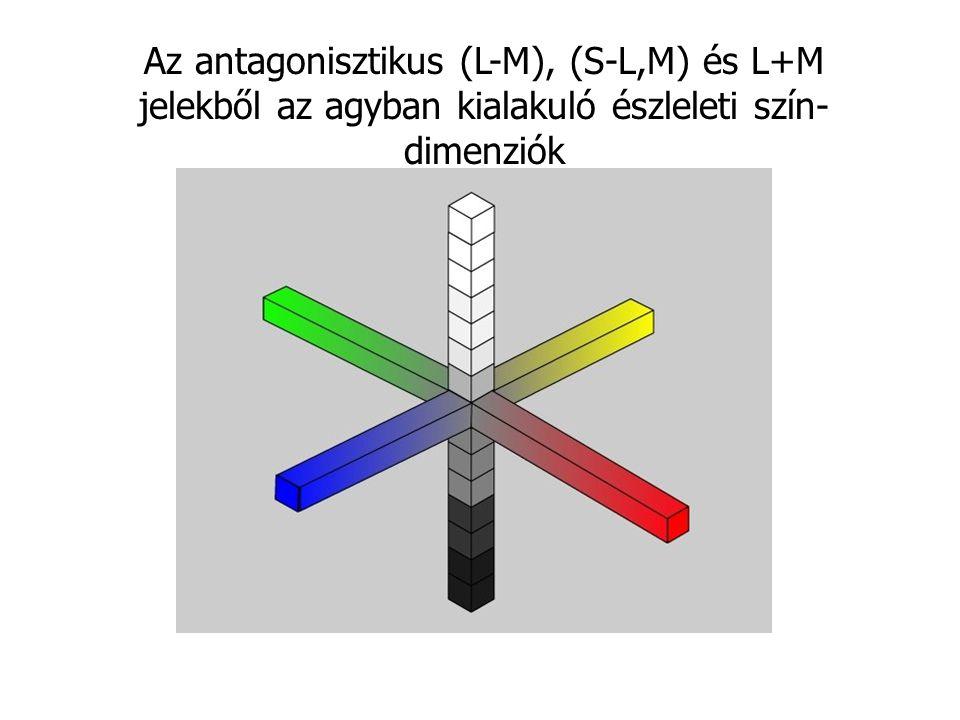 Az antagonisztikus (L-M), (S-L,M) és L+M jelekből az agyban kialakuló észleleti szín-dimenziók
