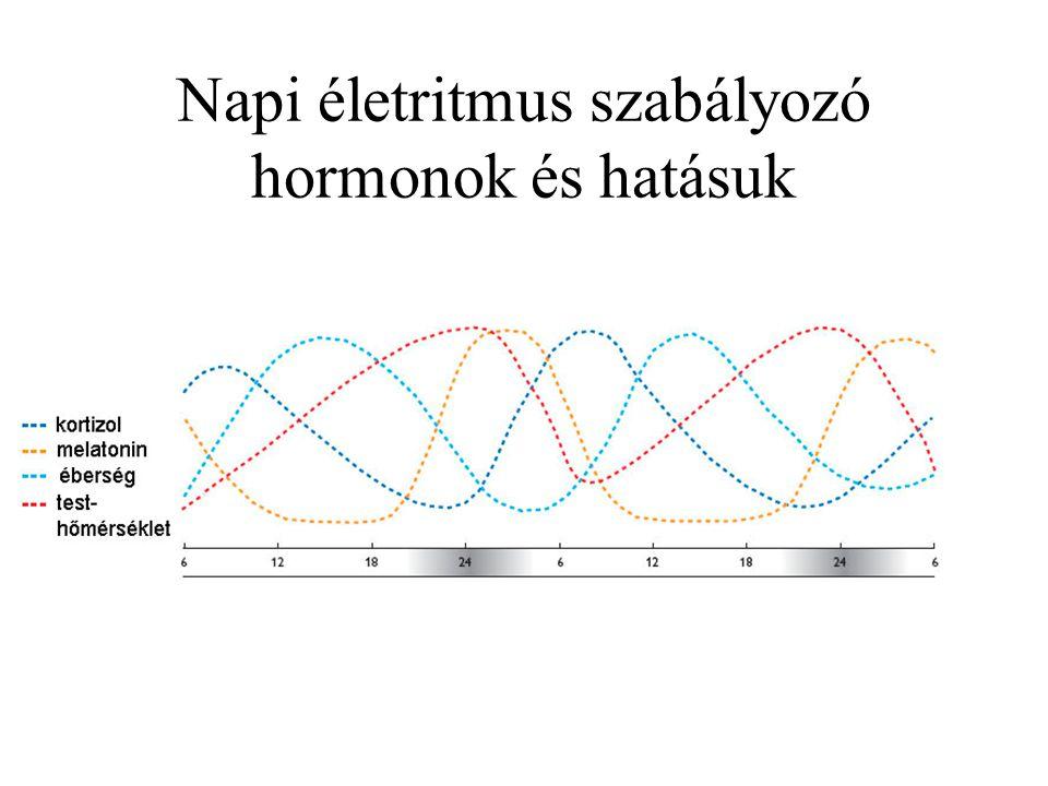 Napi életritmus szabályozó hormonok és hatásuk