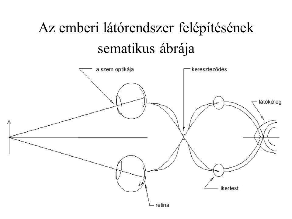 Az emberi látórendszer felépítésének sematikus ábrája