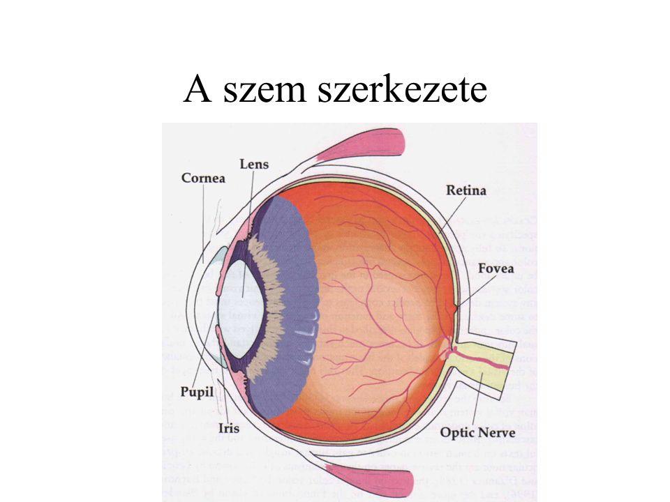 A szem szerkezete