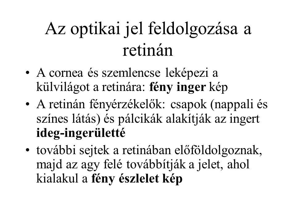 Az optikai jel feldolgozása a retinán