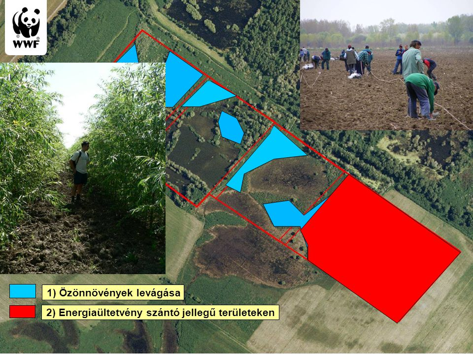 WWF Magyarország - Komplex megoldások