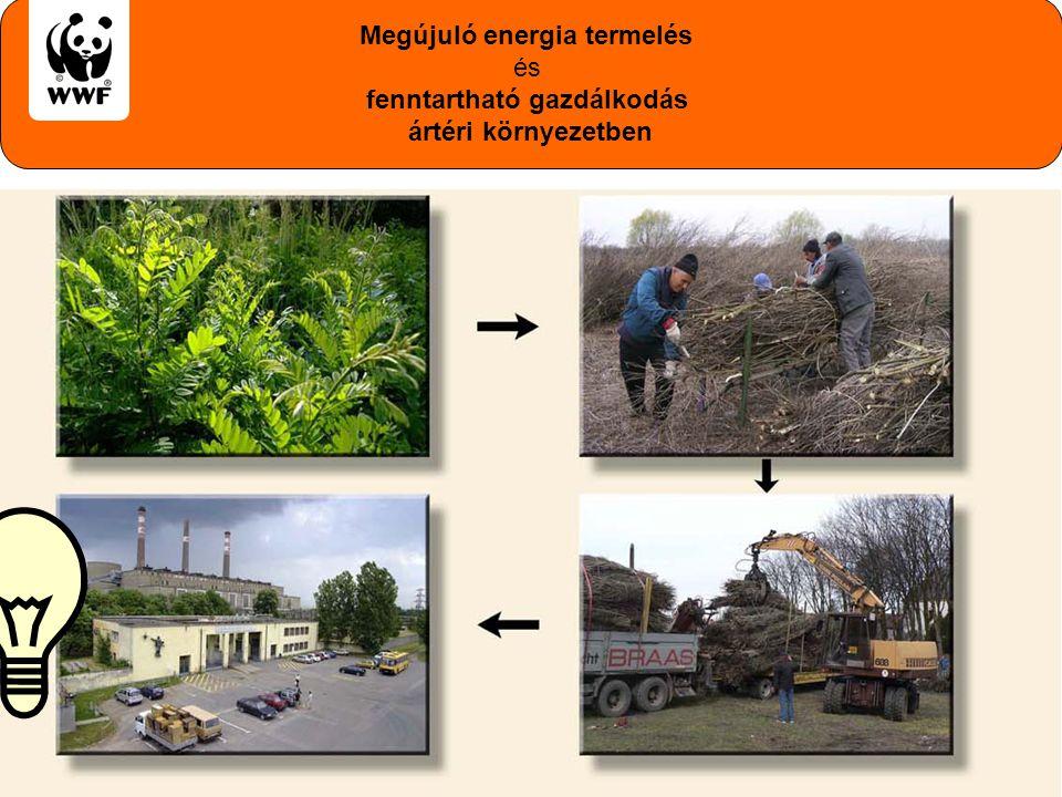 Megújuló energia termelés fenntartható gazdálkodás