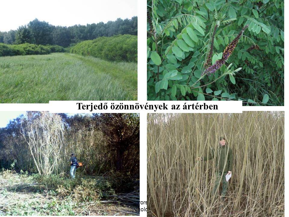 Terjedő özönnövények az ártérben