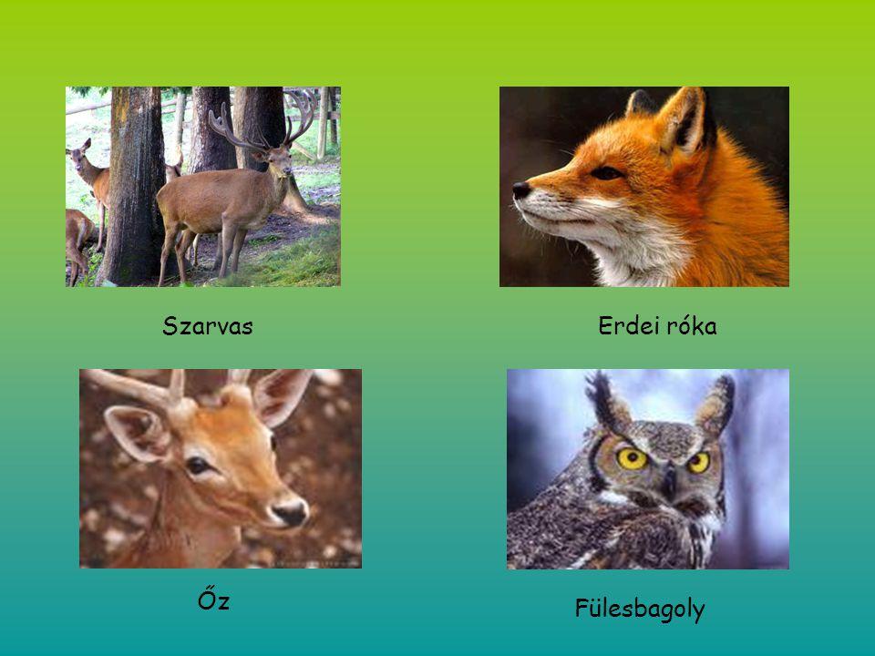 Szarvas Erdei róka Őz Fülesbagoly
