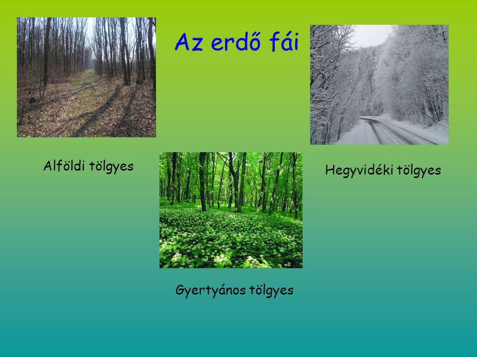 Az erdő fái Alföldi tölgyes Hegyvidéki tölgyes Gyertyános tölgyes