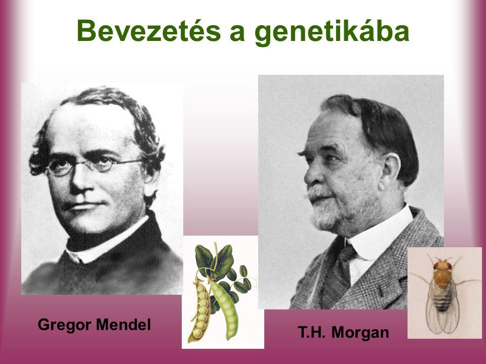 Bevezetés a genetikába